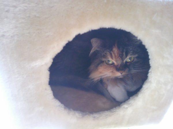 愛猫 さくらちゃん